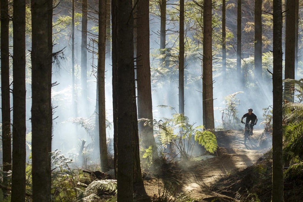 Mountain Biking in Rotorua Towering Redwood trees