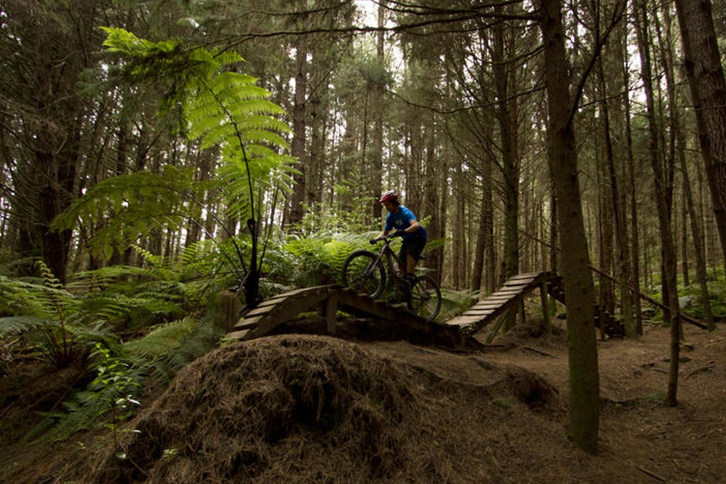 Mountain Biking in Rotorua at the Redwoods