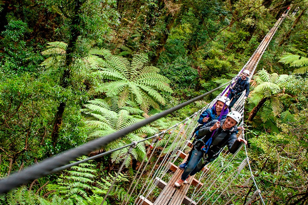 Things to do in Rotorua canopy tree walk