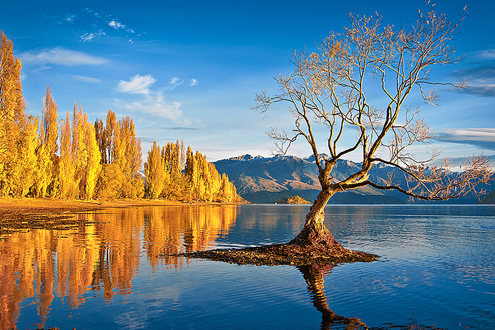 wanaka-tree-south-island-itinerary