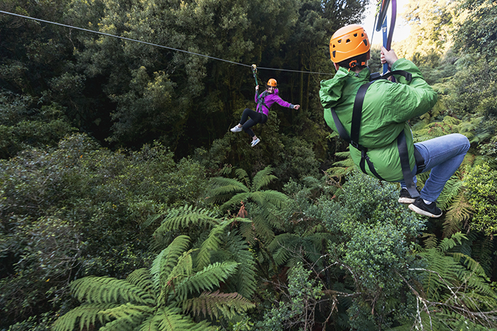 North Island bucket list Ultimate Canopy Tour