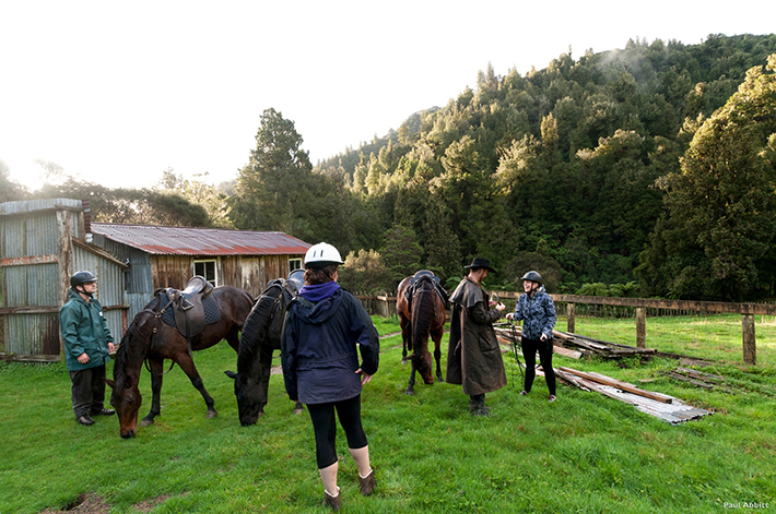 North Island family activities horse trekking
