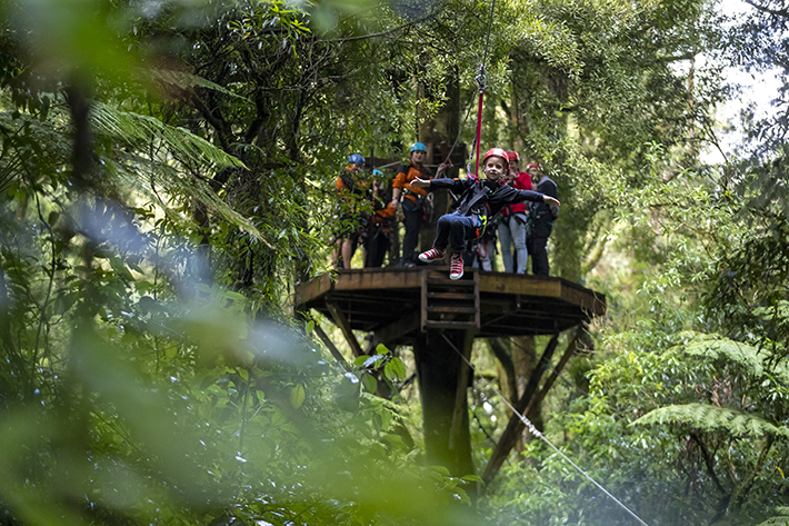 North Island family activities treetop-adventure