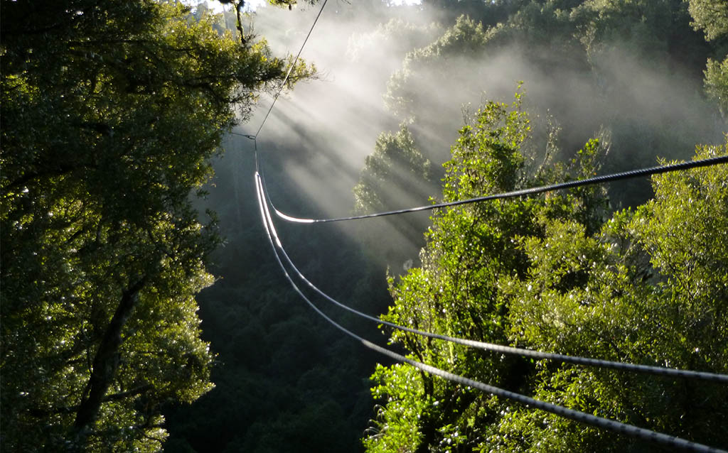 family-activties-for-all-ages-rotorua-canopy-tours-1