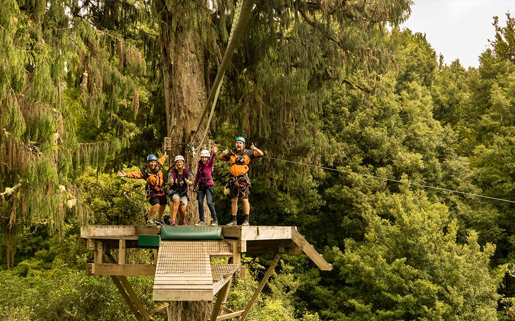 love-ziplining-1000-year-old-rimu-tree