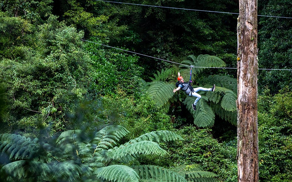 top-10-adventure-activities-rotorua-canopy-tours